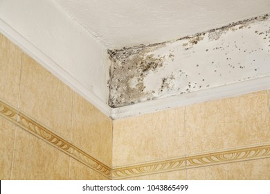 mold in the corner of bathroom over tiles