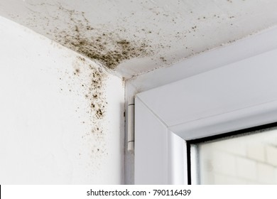 Mold in the corner of the plastic windows.