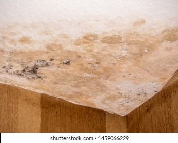 Mold in the corner of the white ceiling and warm color wall