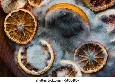 Mold created on the slices of oranges on old wooden background. Concept of Halloween, old, rotten products and life. Top view.
