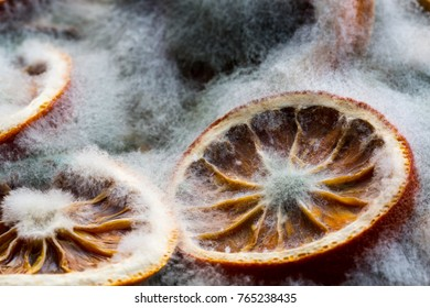 Mold created on the slices of oranges on old wooden background. Concept of old, rotten products and life. Top view.