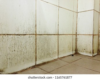 Mold and fungus appear on the bathroom walls.