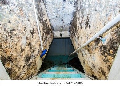 Mold growth on the ceiling and walls of a basement staircase