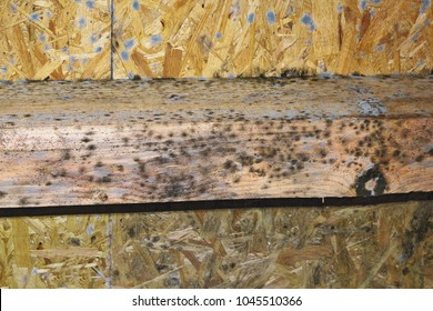 mold on construction wooden elements; the development of mildew is favored by air humidity and damp wood