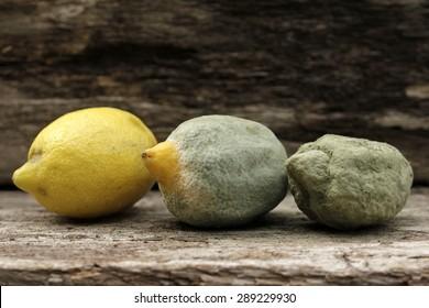 mold on lemon fruit