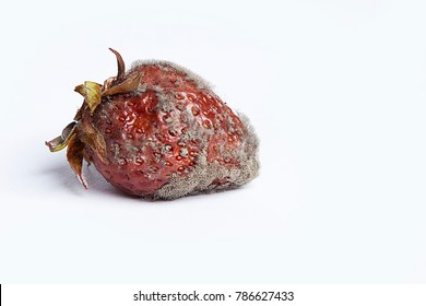 Mold on strawberry. Rotten garden fetus affected by fungus. Spoiled berry isolated on white background