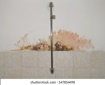 Mold on a wall in house