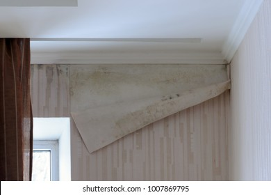 Mold on the wall under wallpaper