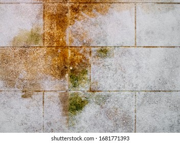 mold stains on white wall