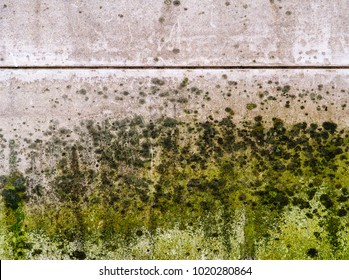 Mold thickly covers a wall. Black, dark green, light green and white mold, mildew and fungus appear to almost completely cover half of a wall.