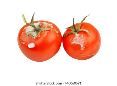 Molded red tomato, isolated on white background