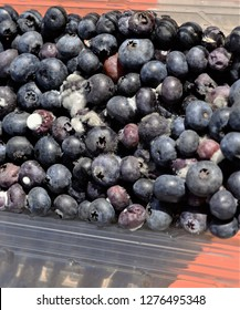 Moldy Bluberries with white spots