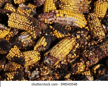 Moldy corn background, Aflatoxin - Aspergillus flavus and Aspergillus parasiticus