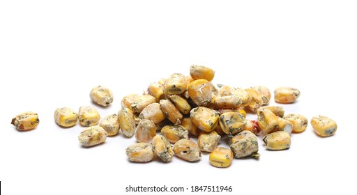 Moldy corn kernels isolated on white background, Aflatoxin  -  Aspergillus flavus and Aspergillus parasiticus