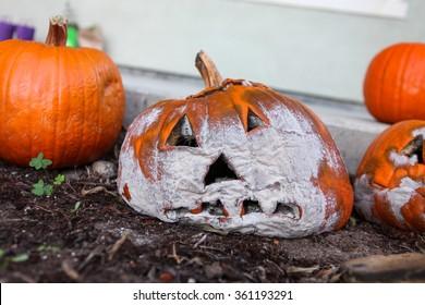 Moldy Halloween Pumpkin.