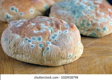 Moldy inedible food. Mold on bread rolls.