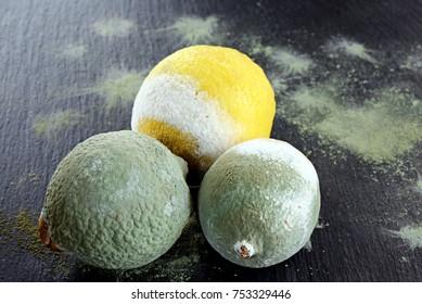 moldy lemons lemon penicillin unhealthy lemons inedible lemons