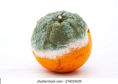 a moldy orange
