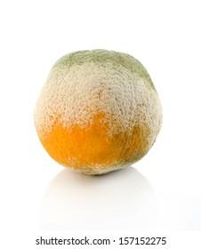 a moldy orange on a white background