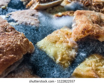 Moldy pie closeup