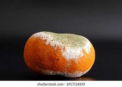 Moldy rotten mandarin isolated on black background. Inappropriate attitude toward food, modern life, consumerism concept. Wasting food conceptual photo. Waiting for a long time. Covered with mildew