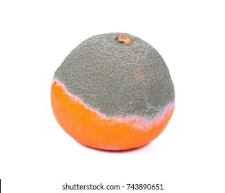 Moldy rotten orange fruit isolated on white.