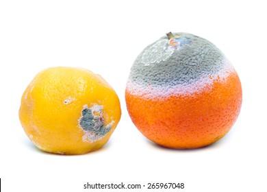 Moldy rotten orange and lemon fruit isolated on white