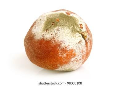 Moldy rotten orange on a white background