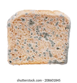 moldy toast bread isolated on white