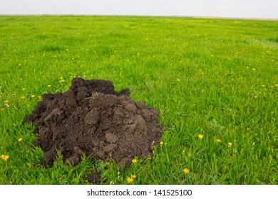 mole hole in a field