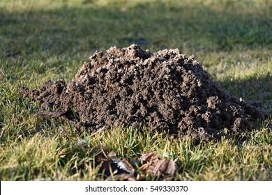 Mole made the garden molehill. Mole
