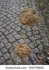 mole on cobblestones