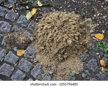 mole sand on a street