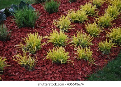 Molinia caerulea 'Variegata' on the flowerbed, sprinkler with red dyed mulch. Ornamental plants for landscaping.