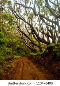 Molokai Forest Preserve Fog