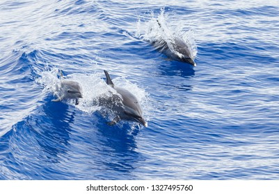 Mom and Baby dolphin leaping out of the waves