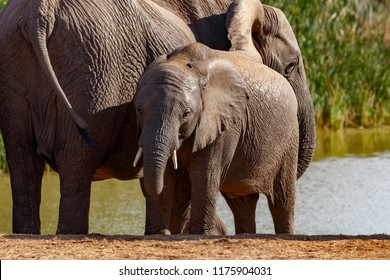 Mom and baby Elephant bonding at the dam