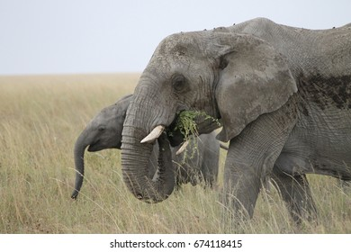 Mom and baby elephant in the Serengeti.