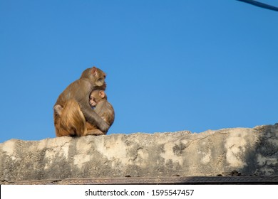 Mom and baby monkey hugging on the wall.