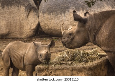 Mom and Baby Rhino Feeding