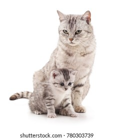 Mom cat and kitten isolated on a white background.