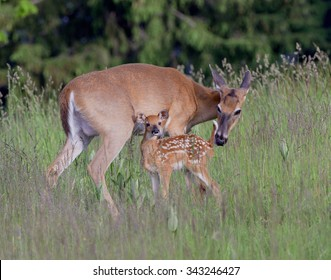 Mom and fawn share a tender moment