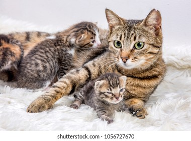 Mom (mother) cat and baby cat (kitten)