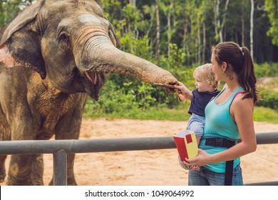 Mom and son feed the elephant at the zoo
