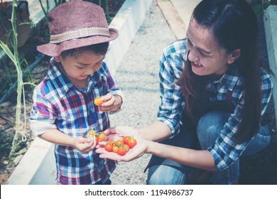 mom and son are picking tomatoes in the greenhouse, garden of planting non-toxic vegetables