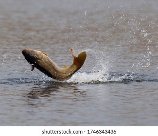 The moment the carp jumped into the lake, it was filmed with a high-speed shutter.