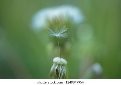 Moments of summer. Dandelion flower seeds blowing away. Taraxacum flower on nature landscape. Wild dandelion on summer day. Summer nature. Blowball. Flowering plant. Beauties of nature.