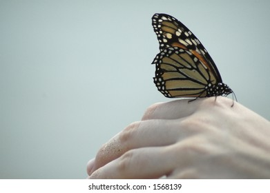A monarch butterfly about to launch into flight from an outstretched hand.