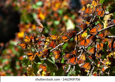 Reserva de Biosfera de Mariposas Monarch, Michoacán, México