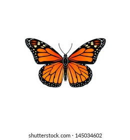 Monarch Butterfly (Danaus plexippus), belongs to the Nymphalidae family. it is also known as the wanderer butterfly or milkweed butterfly.